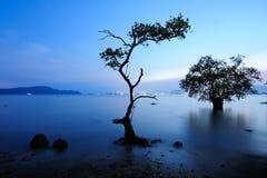 Mangrove in zonsondergang royalty-vrije stock afbeelding