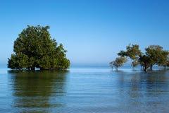 Mangrovebäume auf dem Indischen Ozean Lizenzfreies Stockfoto