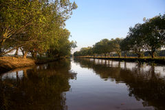 Mangrovebomen bij Tram Chim, Dong Thap-provincie, Vietnam Royalty-vrije Stock Fotografie