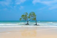 Mangrovebomen in het water royalty-vrije stock foto's