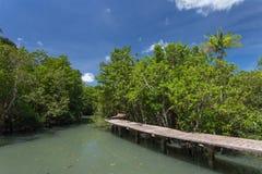 Mangrovebomen met het waarnemen van brug Stock Fotografie