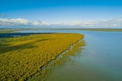 Mangrovebomen in oceaan zout ondiep water stock afbeeldingen