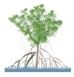 Mangroveboom stock illustratie