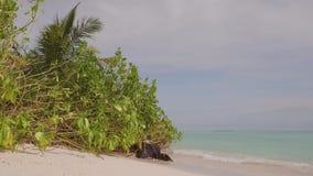 Mangroveboom bij kalme oceaan bij tropisch strand stock videobeelden