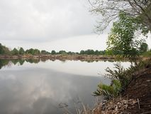 Mangroveboom in intertidal bosbezinning in het water royalty-vrije stock afbeeldingen