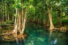 Mangrovebos stock fotografie