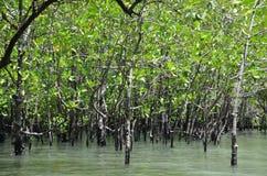 Mangrovebos 1 Royalty-vrije Stock Fotografie