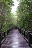 Mangrovebos en de brug Stock Afbeeldingen