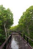 Mangrovebos en de brug Stock Foto's