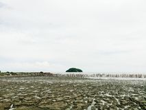 Mangrovebos en het eenzame eiland Stock Foto