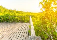 Mangrovebos en zonsondergangachtergrond Royalty-vrije Stock Fotografie