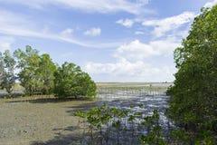 Mangrovebos in heldere hemel Royalty-vrije Stock Afbeelding