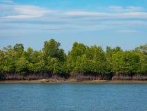 Mangrovebos in het Tanintharyi-Gebied, Myanmar Royalty-vrije Stock Foto