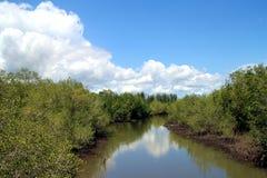 Mangrovebos, huahin, kanaal stock afbeelding