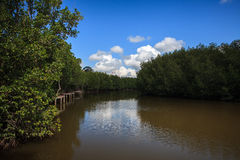 Mangrovebos met blauwe hemel Stock Afbeeldingen