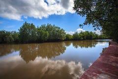 Mangrovebos met blauwe hemel Royalty-vrije Stock Foto's