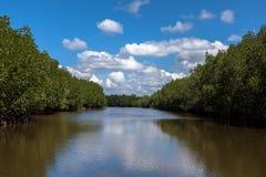 Mangrovebos met blauwe hemel Stock Foto's
