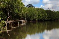 Mangrovebos met de brug van aardslepen Stock Foto
