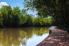 Mangrovebos met de brug van aardslepen Stock Afbeeldingen