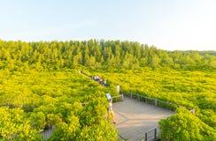 Mangrovebos of Tung Prong Thong Stock Foto's