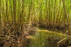 Mangrovebos in Tung Prong Thong Stock Fotografie