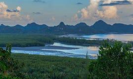 Mangrovebos in zonsondergang stock foto's