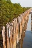 Mangrovebossen Stock Afbeelding