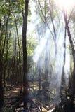 Mangrovebossen Royalty-vrije Stock Foto's