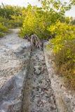 Mangrovedräneringdike Fotografering för Bildbyråer
