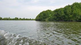 Mangrovefartyget turnerar till och med kanalerna av mangroveskogen lager videofilmer