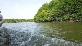 Mangrovefartyget turnerar till och med kanalerna av mangroveskogen i Indonesien lager videofilmer