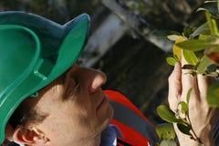 Mangrovegesundheitsüberprüfung Lizenzfreie Stockfotos