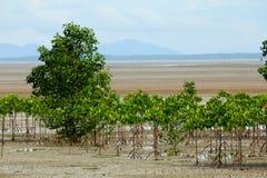mangrovegyttjig landremsa Royaltyfria Bilder