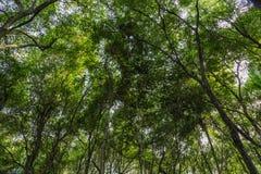 Mangrovenüberdachung, wie in der Lekki-Erhaltungs-Mitte in Lekki, Lagos Nigeria gesehen stockfoto