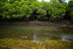 mangroven Stock Foto's