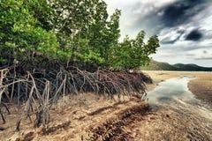 Mangroven royalty-vrije stock fotografie