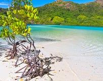 Mangroven royalty-vrije stock afbeeldingen
