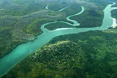 mangroven Stockfoto