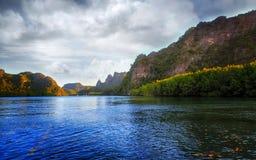 Mangroven Royaltyfri Fotografi