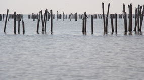 mangroven Lizenzfreies Stockfoto