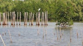 mangroven Lizenzfreie Stockfotos
