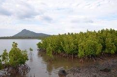 Mangroven 1 Royalty-vrije Stock Foto