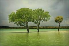Mangroven Stockbild