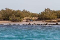 mangroven Stockfotos