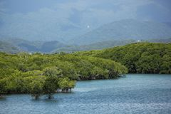 mangroven stock fotografie