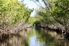 Mangroven bij duizend eilanden royalty-vrije stock foto