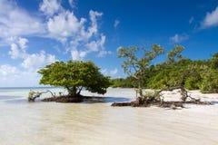 Mangroven bij een strand in de Sleutels van Florida stock afbeeldingen