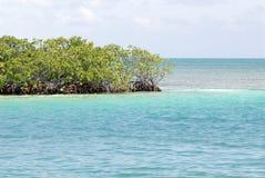 Mangroven, Caye Breeuwijzer, Belize Stock Foto's