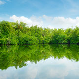 Mangroven en blauwe hemel stock foto