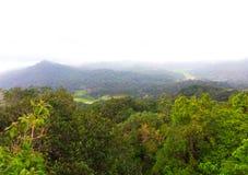 Mangroven, Hügelansicht, stockfoto